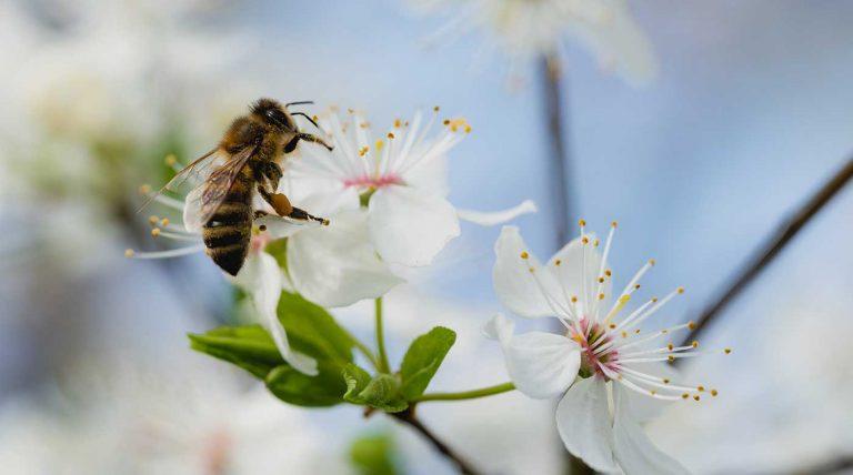 api in via di estinzione